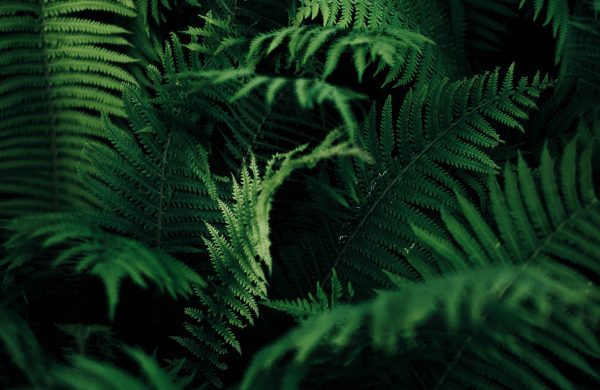 Terrarium Pluviali